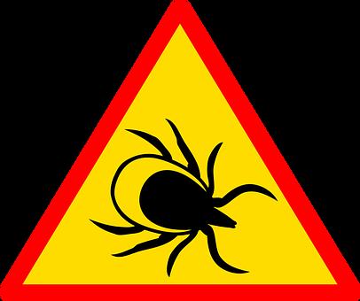fachowe zwalczanie insektów - warszawa