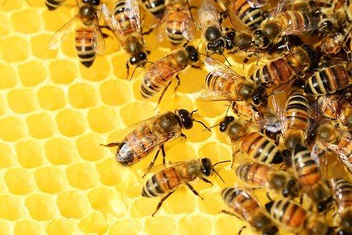 nowoczesny odymiacz do pszczół
